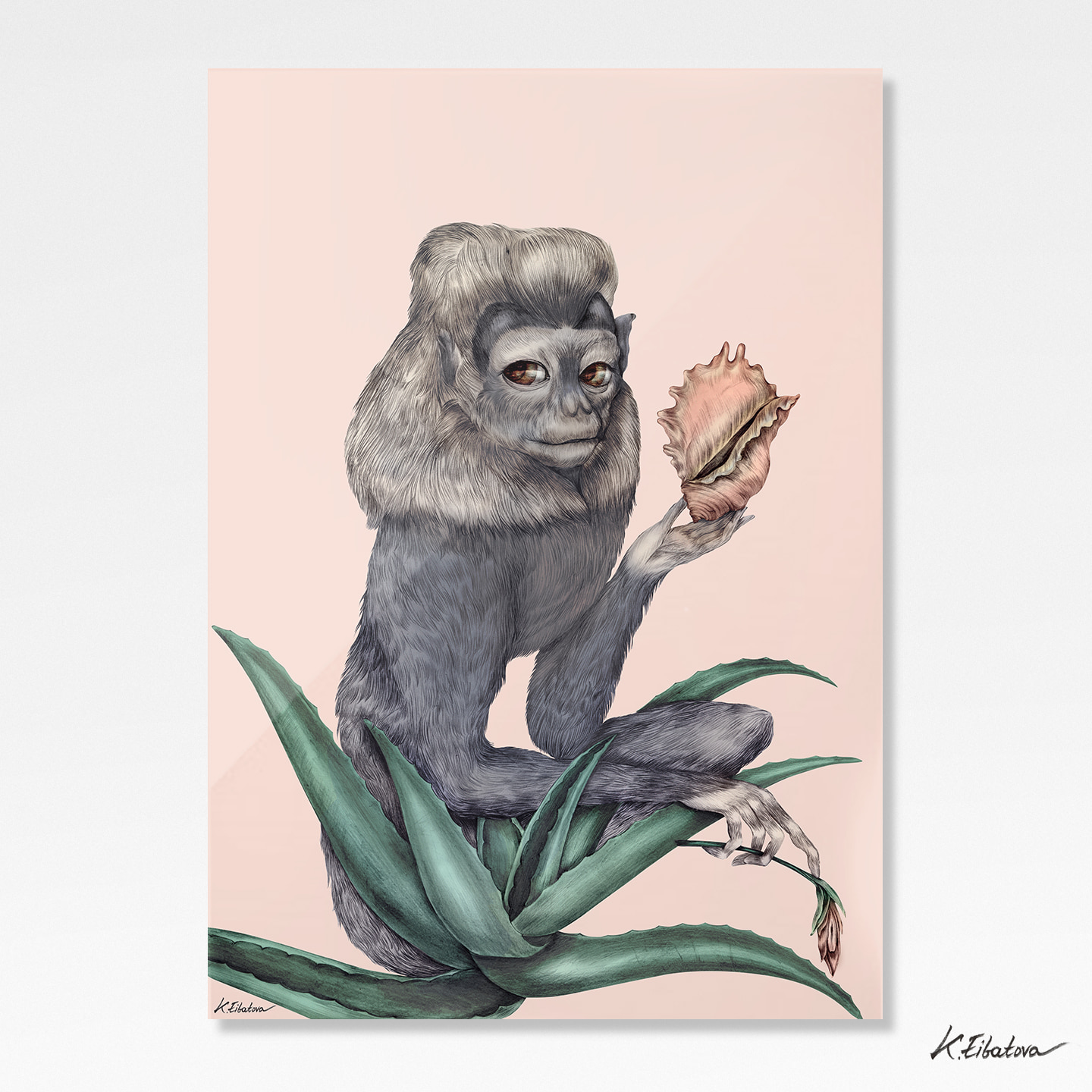 Monkey with the Shell